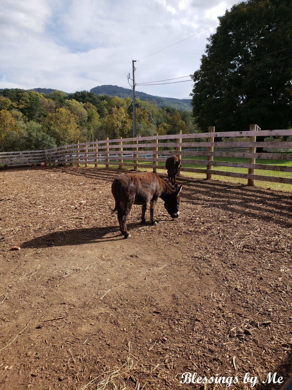 Pumpkin Patch Donkeys